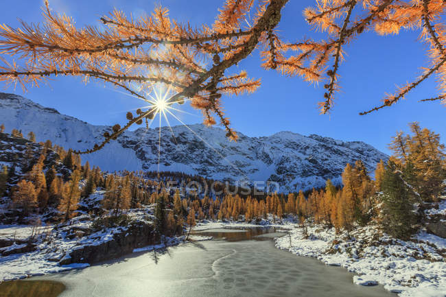 Red larches frame frozen Lake Mufule — Stock Photo