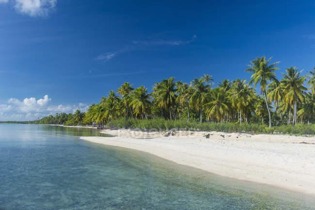 Пальмы бахромой белый песчаный пляж — стоковое фото