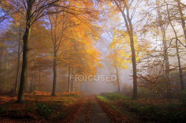 Autumnal forest, Germany — Stock Photo