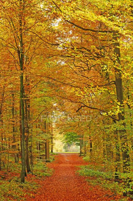 Осенний лес, Германия — стоковое фото
