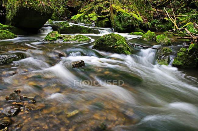 Riacho da floresta, Schiessendumpel — Fotografia de Stock
