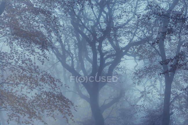 Herbstlichen Wald, Deutschland — Stockfoto