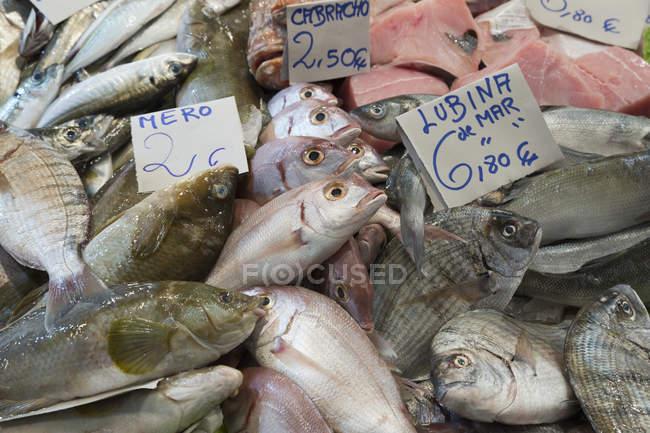 Свіжа риба в продовольчому ринку — стокове фото