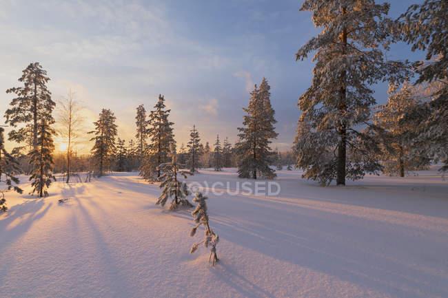 Pôr do sol do Ártico iluminar o bosque nevado — Fotografia de Stock