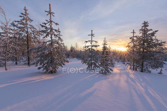 Arktische Sonnenuntergang beleuchten die verschneiten Wälder — Stockfoto