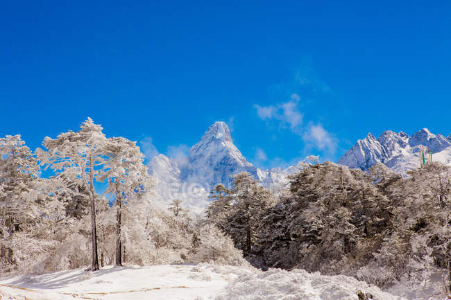 Mont Everest avec neige couvert de forêt — Photo de stock
