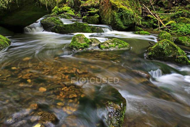 Riacho da floresta, Schiessendumpel, Mullerthal — Fotografia de Stock