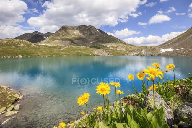 Lago turchese incorniciato da fiori gialli — Foto stock