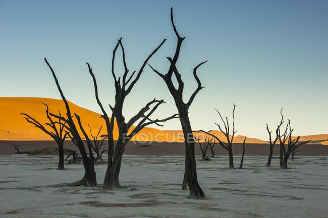 Old dry lake in Namib desert — Stock Photo