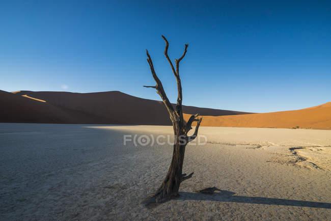 Старый сухое озеро в пустыне Намиб — стоковое фото