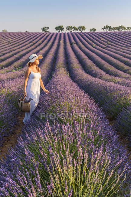 Женщина с протянутой лавандовые поля — стоковое фото