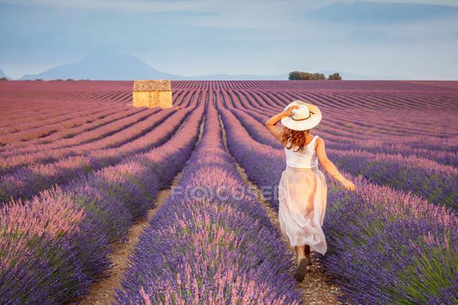 Женщина в шляпе, работает в лавандовые поля — стоковое фото