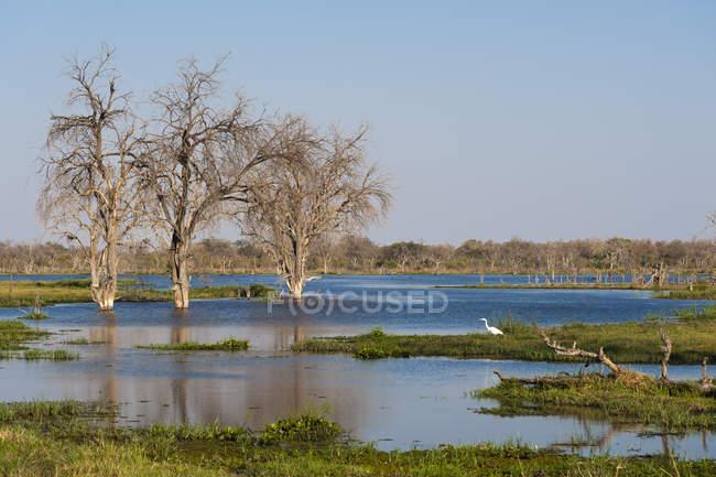 Khwai River nel Delta dell'Okavango — Foto stock