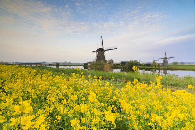 Windmills framed by yellow flowers — Stock Photo