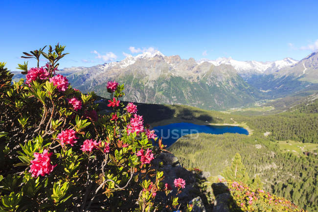 Rhododendrons et lac Palu — Photo de stock