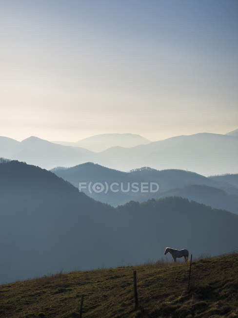 Horse at sunrise, Apennines — Stock Photo