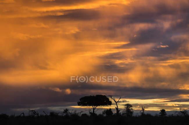 Puesta de sol sobre el Parque Nacional Kruger - foto de stock
