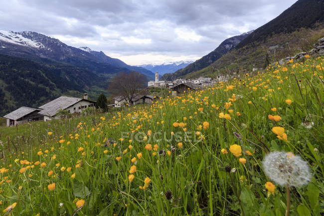 Prairies de fleurs jaunes — Photo de stock