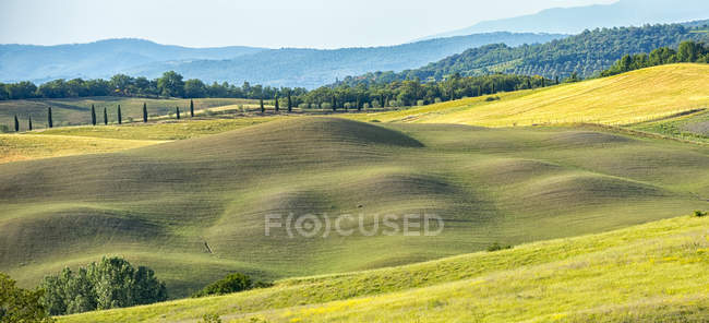 Meadows, Asciano, Val d Orcia — Stock Photo