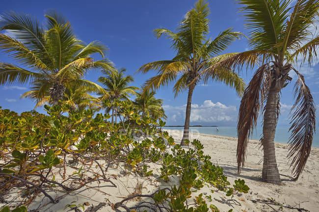 Рослинність уздовж пляжу затоки — стокове фото