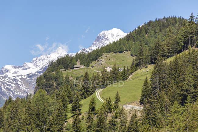 Verte forêt et montagnes enneigées — Photo de stock