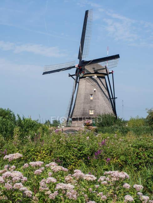 Старая мельница в летних поле — стоковое фото