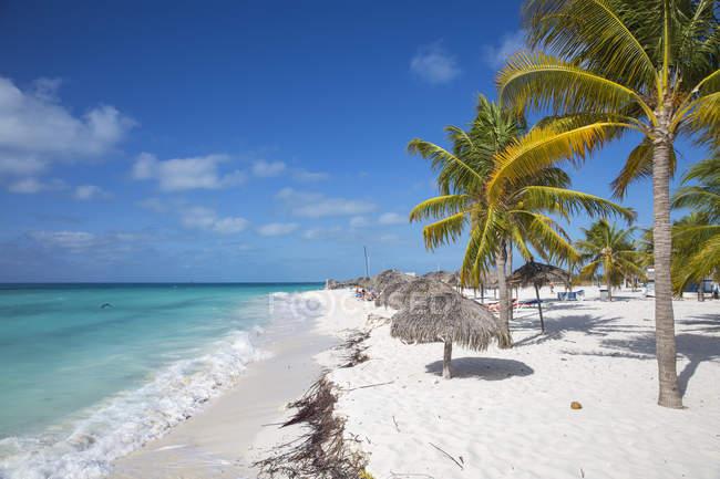 Кайо Ларго-де-Сур, Куба, Карибы - 5 декабря 2016: Пальмы на пляже Playa сирена — стоковое фото
