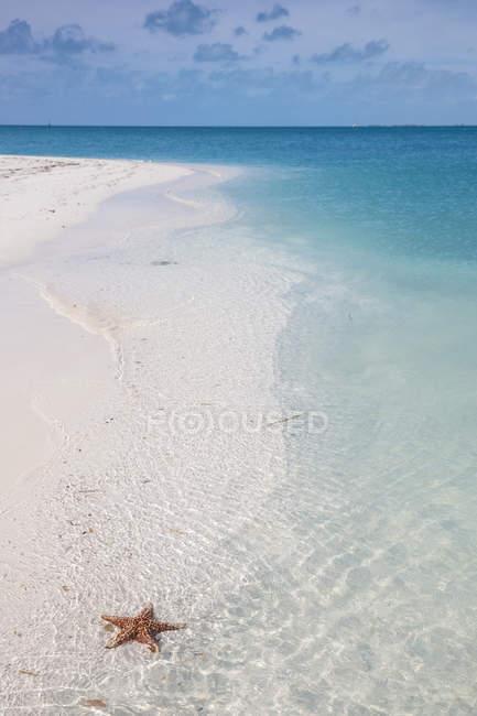 Sirena піщаного пляжу Плайя — стокове фото