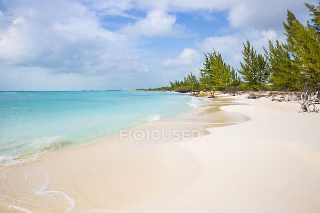 Playa Paraiso sandy beach with firs — Stock Photo
