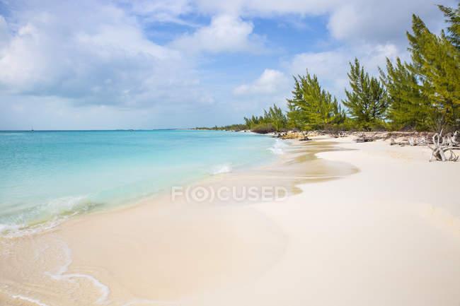 Пляж Плайя-Параизо песчаный с елей — стоковое фото