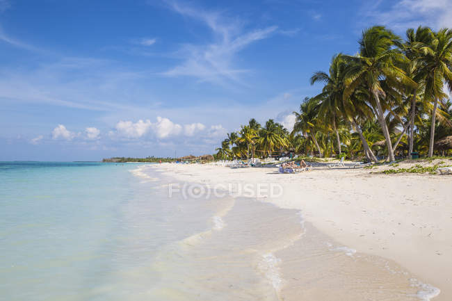 Cayo Largo De Sur, Cuba, Caribbean - December 5, 2016: Palm trees at Playa Sirena beach — Stock Photo