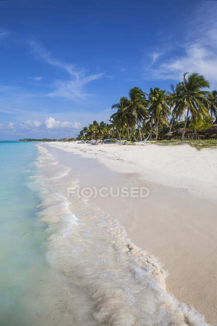 Пляж Кайо Levisa с пальмами — стоковое фото