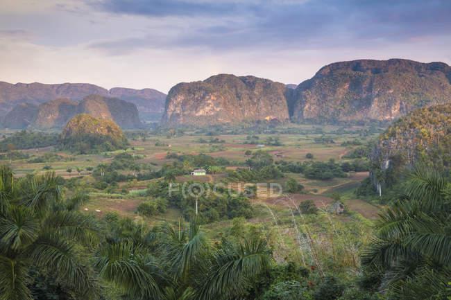 Vue panoramique des arbres dans la vallée de Viñales, Cuba, l'Amérique centrale — Photo de stock
