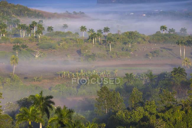 La vallée de Vinales dans la brume — Photo de stock
