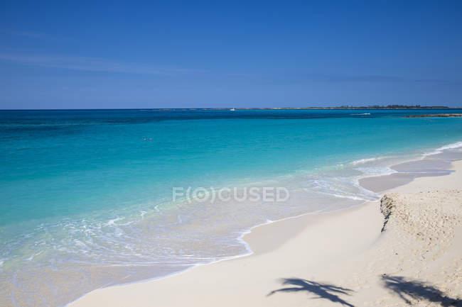 Тени пальмовых деревьев на пляже капусты — стоковое фото