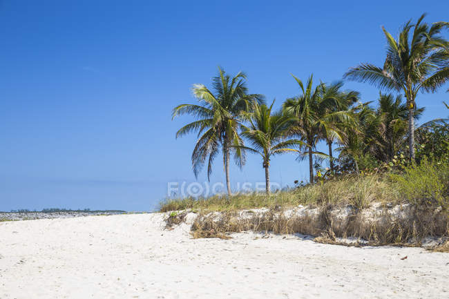 Cabbage Beach with palm trees — Stock Photo