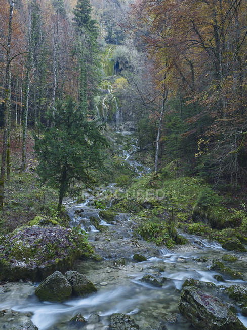 Forest and river in Cascade du Herisson — Stock Photo