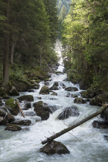 Mountaing river Sarca — Stock Photo