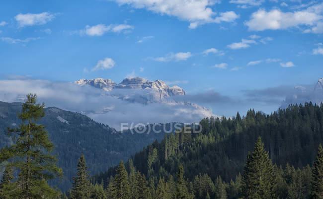 Massif de Brenta avec sapins — Photo de stock