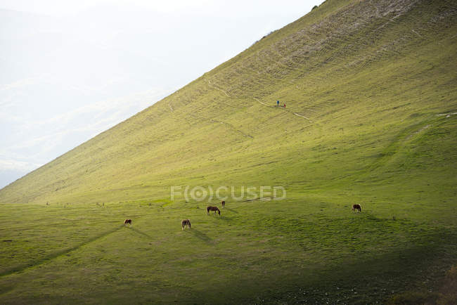 Horses grazing in field at sunset — Stock Photo