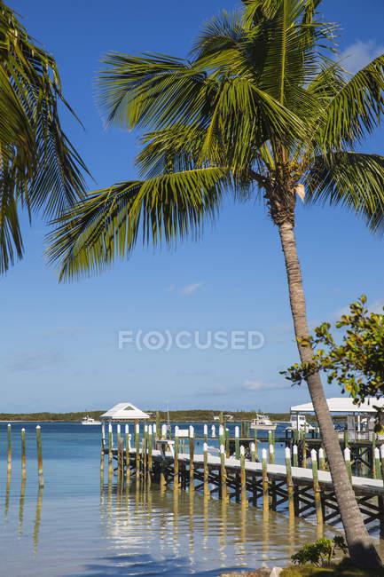 Praia do Taiti com palmeiras — Fotografia de Stock