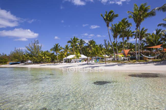 Sunset Beach com palma árvores, grande Guana Cay, Ilhas Abaco, Bahamas — Fotografia de Stock