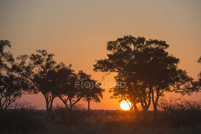 Sunset in Savuti marsh — Stock Photo