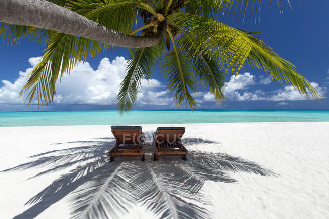 Deck chairs under palm trees — Stock Photo