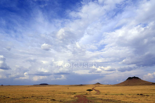 African savanna with golden plains — Stock Photo