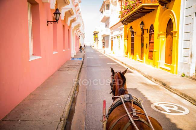 Кінь по дорозі в Старому місті — стокове фото
