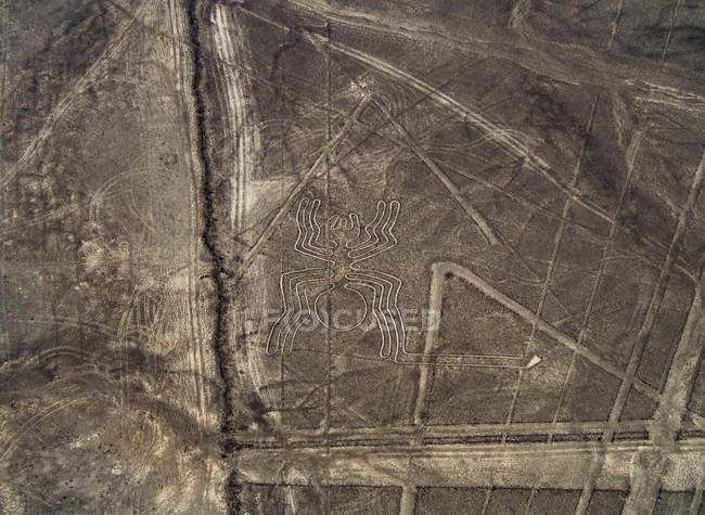 Ragno misterioso geoglifo — Foto stock
