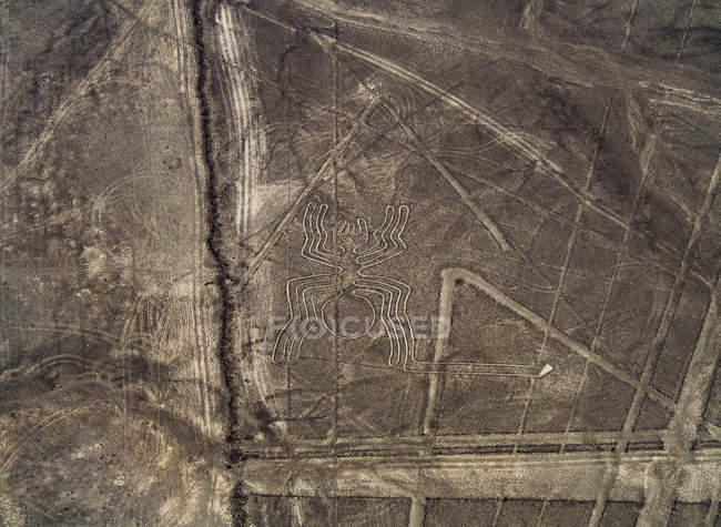 Таємничий павук Geoglyph — стокове фото