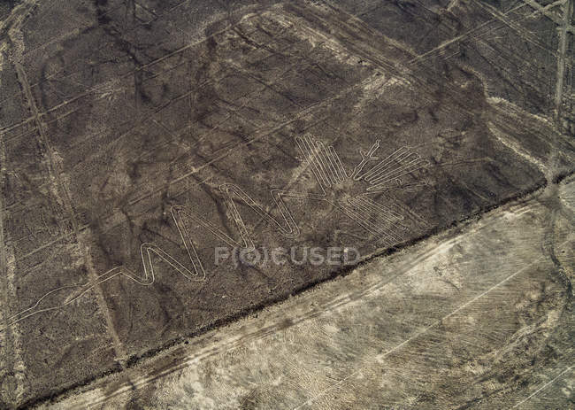 Таинственный цапля Геоглиф — стоковое фото