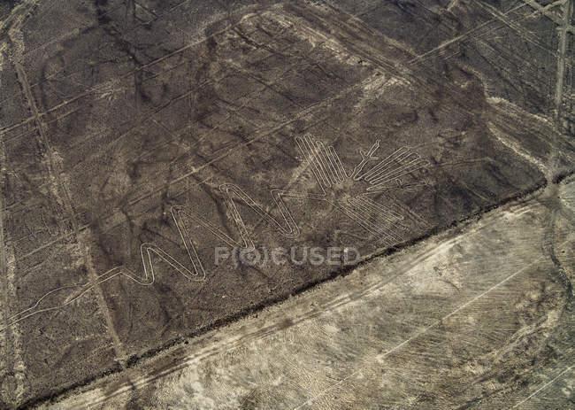 Таємничий чапля Geoglyph — стокове фото